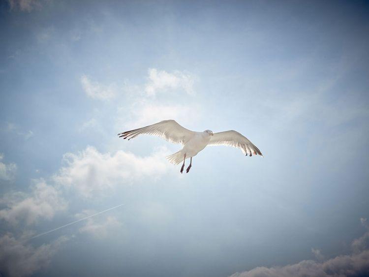 Eine Möwe fliegt am Himmel über dem Wattenmeer